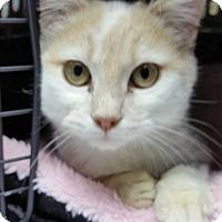 Adopt A Pet :: Miracle - Stafford, VA