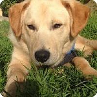 Adopt A Pet :: Bundy - Torrance, CA