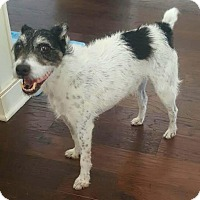 Adopt A Pet :: JAKE - Terra Ceia, FL