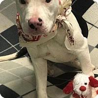 Adopt A Pet :: Karissa - Lebanon, ME