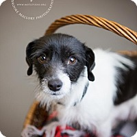 Adopt A Pet :: Mary Winchester - Redmond, WA