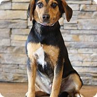 Adopt A Pet :: Buster - Waldorf, MD