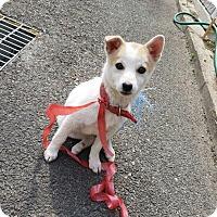 Adopt A Pet :: Beau - Fairfax, VA
