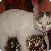 Adopt A Pet :: Kip - Brooklyn, NY