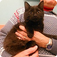 Adopt A Pet :: Josh - Reston, VA
