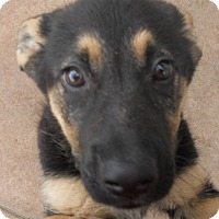 Adopt A Pet :: Baby Wyatt - Oakley, CA