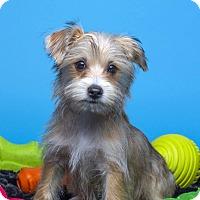Adopt A Pet :: Pete - Baton Rouge, LA