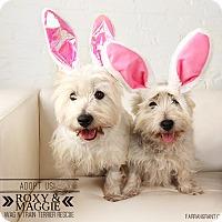 Adopt A Pet :: Maggie & Roxie-Pending Adoptio - Omaha, NE
