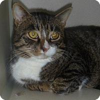 Adopt A Pet :: Shakespur - Hamburg, NY
