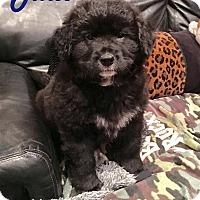 Adopt A Pet :: Julio - Milton, GA