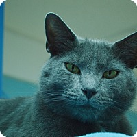 Adopt A Pet :: Gustav - Evansville, IN