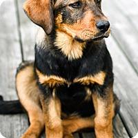 Adopt A Pet :: Mink - Mt. Prospect, IL