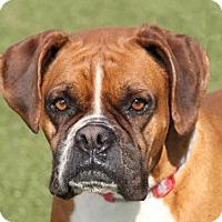 Adopt A Pet :: Aja - Wichita, KS