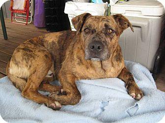 Mountain Cur Mix Dog for adoption in Puyallup, Washington - Tyson