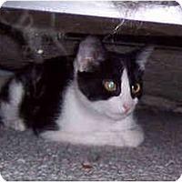 Adopt A Pet :: Jaimie - Summerville, SC