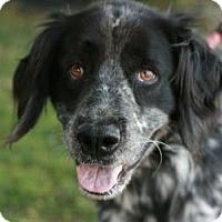 Adopt A Pet :: Molly AKA Dusty - Canoga Park, CA