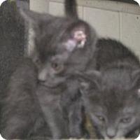 Adopt A Pet :: Ivan - Dallas, TX