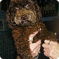 Adopt A Pet :: Puddin - South Amboy, NJ