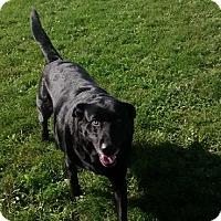 Adopt A Pet :: Lindy - Hamilton, ON