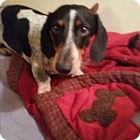 Adopt A Pet :: Lansdale - Pinellas Park, FL