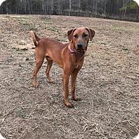 Adopt A Pet :: Rafe - Shaw AFB, SC