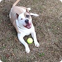 Adopt A Pet :: Sampson - East Randolph, VT