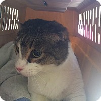 Adopt A Pet :: Butch - Fort Worth, TX