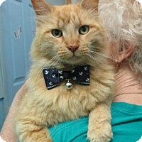 Adopt A Pet :: Davey - Picayune, MS