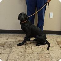 Adopt A Pet :: Butler - Oviedo, FL