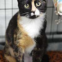 Adopt A Pet :: Justine170623 - Atlanta, GA