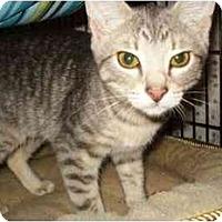 Adopt A Pet :: Layla - Colmar, PA