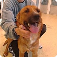 Adopt A Pet :: Trooper (Courtesty Post) IN CT - West Hartford, CT