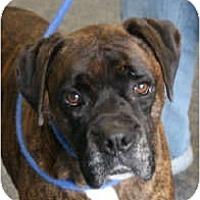 Adopt A Pet :: Eggie & Ginger - Bonded PAIR! - Grafton, MA