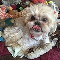 Adopt A Pet :: KIRA - Los Angeles, CA