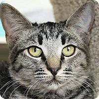 Adopt A Pet :: Paprika - Mountain Center, CA