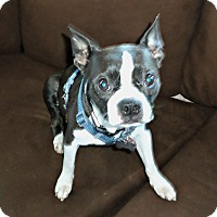Adopt A Pet :: Carley- Adoption Pending - Greensboro, NC