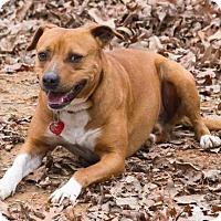 Adopt A Pet :: Mulligan - Blairsville, GA