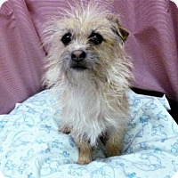 Adopt A Pet :: Elsa - Diamondville, WY