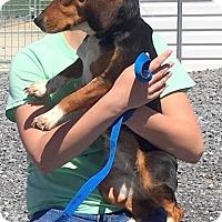 Adopt A Pet :: Matilda - Lexington, MA