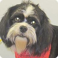 Adopt A Pet :: Santa Paws - Kittery, ME