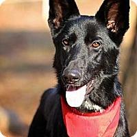Adopt A Pet :: Skyla - Albany, NY