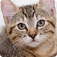 Adopt A Pet :: Samantha - Irvine, CA