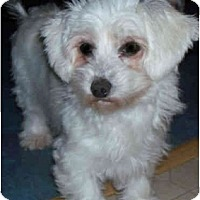 Adopt A Pet :: Mary - Wellington, OH