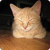 Adopt A Pet :: Orange Julius - Hilham, TN