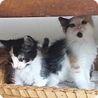 Adopt A Pet :: JosephinaRegina - Summerville, SC
