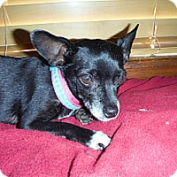 Adopt A Pet :: gYpSeY - Atascadero, CA