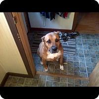 Adopt A Pet :: Blue - Alliance, NE