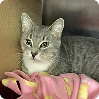 Adopt A Pet :: Misty - Colmar, PA