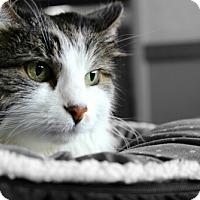 Adopt A Pet :: Tracer - Cedar Rapids, IA