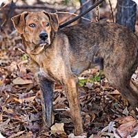 Adopt A Pet :: Archer: Lee Arrendale Program - Clarkesville, GA